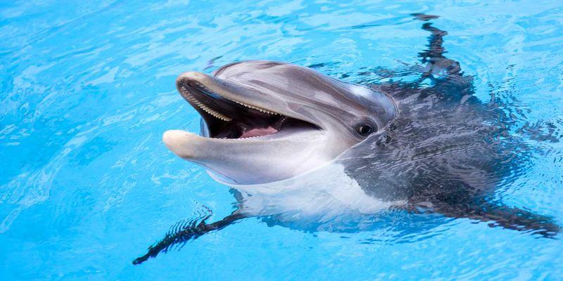 Klaipēda – Delfinārijs - Dino parks - Palanga (2 dienas)